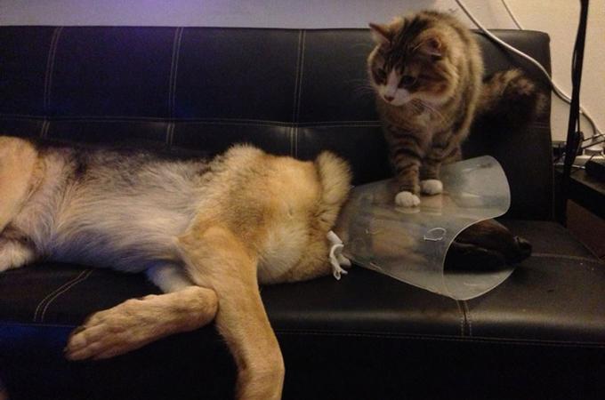 幅をきかせる猫にタジタジの犬。でも本当は仲良しな犬猫画像14選