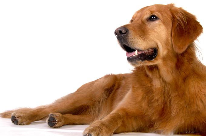 子供をしかる母親、それをなだめる愛犬の行動が愛に溢れていると話題に