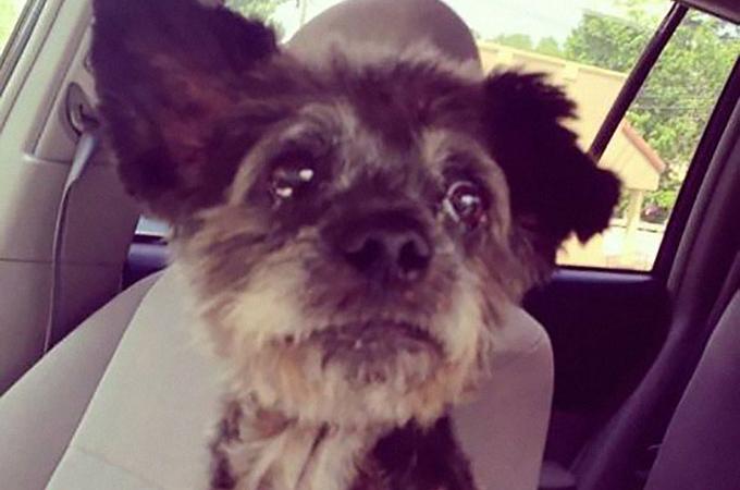 ガンを患う1匹の犬。幸せな最期を迎えるためにある女性のとった行動とは?