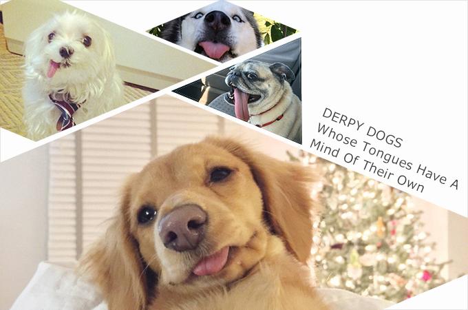 数年遅れで「てへぺろ」が犬業界で再び密かなブームを迎える!?