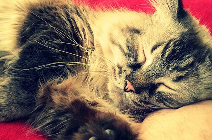 里親の見つかりにくいシニア猫が第二の人生を幸せに過ごす素敵な表情