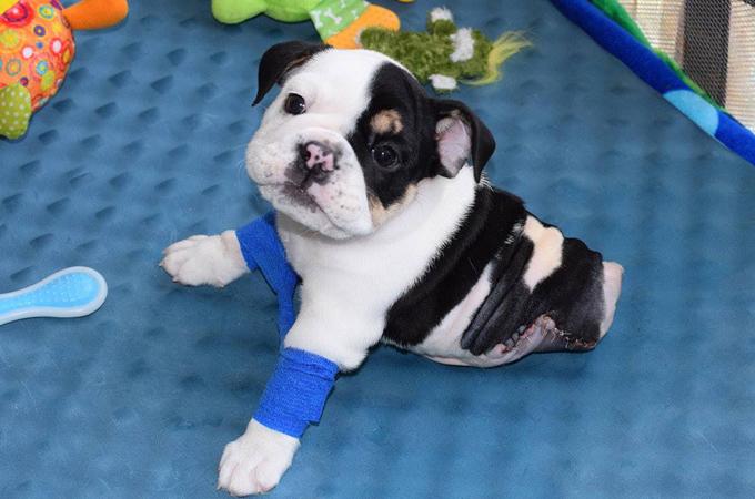 下半身を失った犬。ハンデをものともせず懸命に生きる姿に勇気をもらう