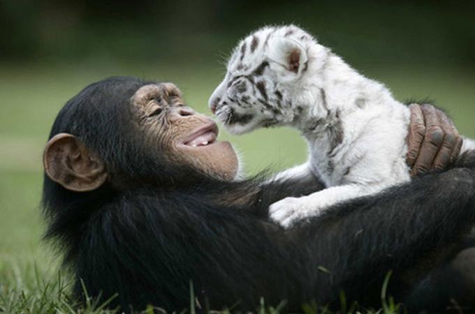 世界平和のお手本はここにあった!種を超えた絆から人間が学ぶこと