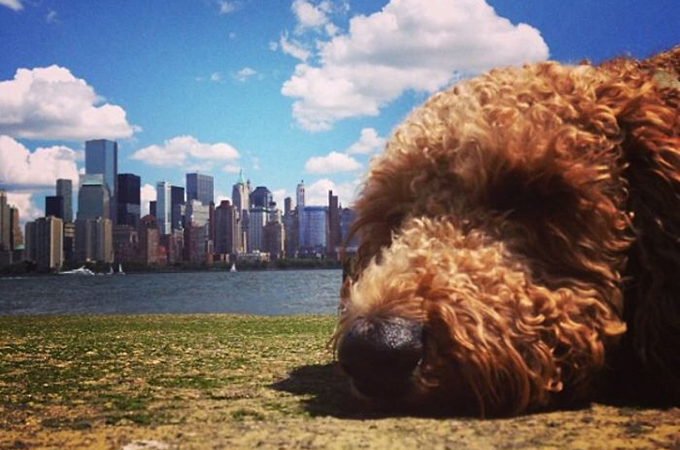 おどろきのミステリー!世界各地で巨大化した犬たちが発見される