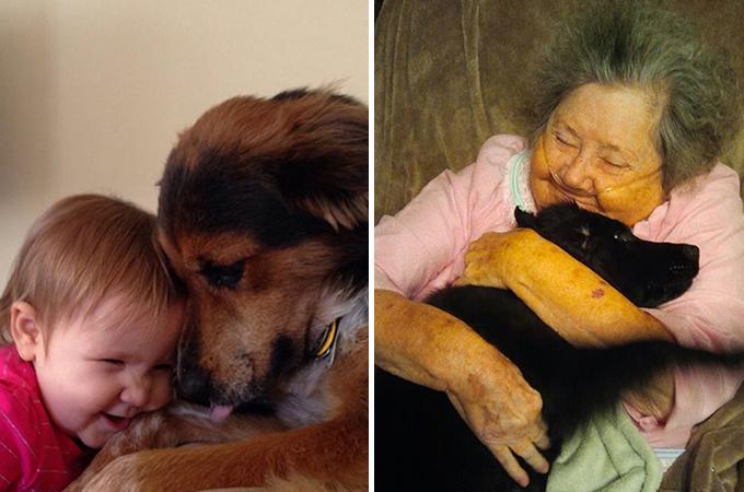 私たちは決して傷つけてはいけない!人間の最良の友である犬たちを。