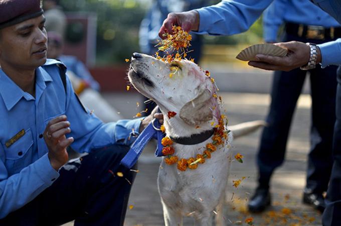 人間の最良の友、犬たちに敬意を込めて開催される素敵なお祭り
