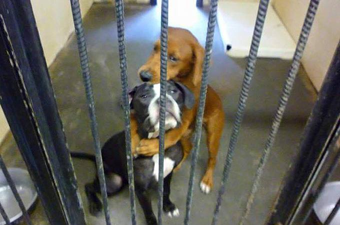 安楽死直前に救出された2匹の犬。お互いを守り合う絆に心うたれる