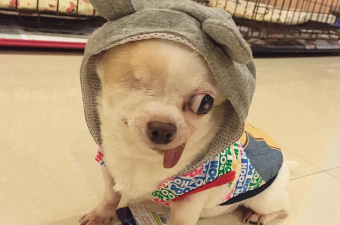 片目のハンデを感じさせない愛らしい表情をした海賊犬ヨーグルト