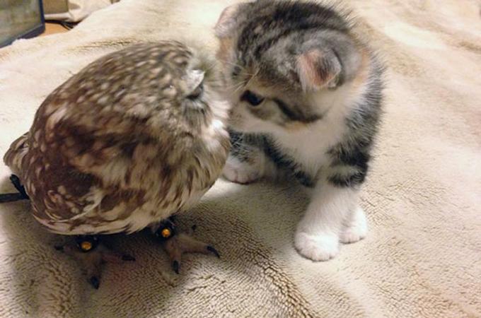 親友となったフクロウと子猫の寄り添う姿が可愛すぎると虜になる人が続出