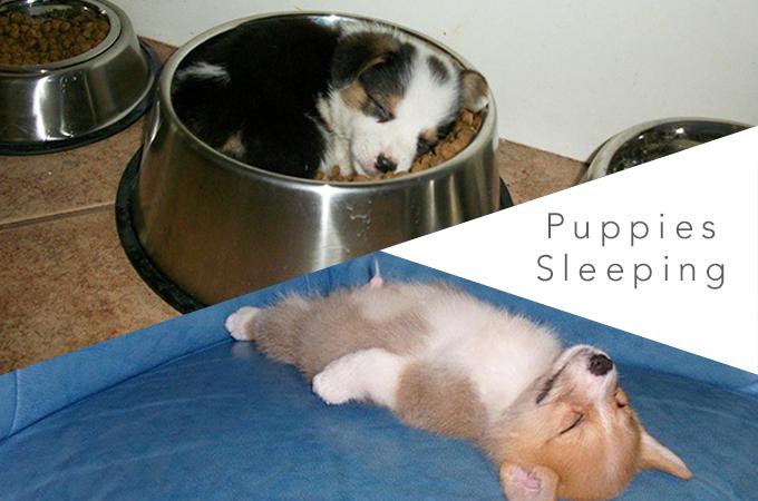 いつでもどこでも寝ることが出来るワンコたちの癒し画像20選