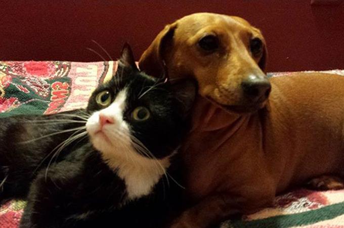 わたしが守るから!足の不自由な猫を守る犬との2匹の絆が素晴らしい