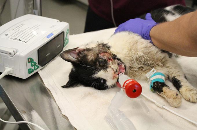 死んだはずの猫が埋葬から5日後に瀕死の状態で土の中から奇跡の生還