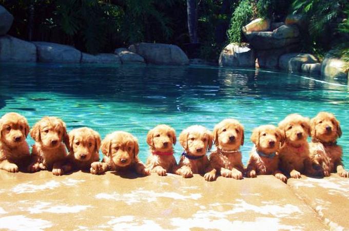 私たちを笑顔にさせてくれる可愛い犬や猫、動物たちの画像27選
