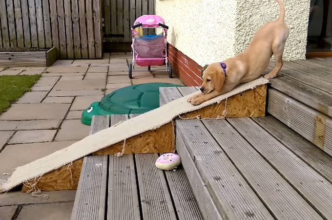 「すーーーん」とスロープを降りる愛犬の姿に思わず大爆笑