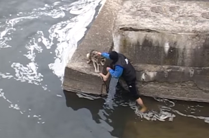 川に転落し悲しい鳴き声をあげ助けを求める1匹の犬を無事救出