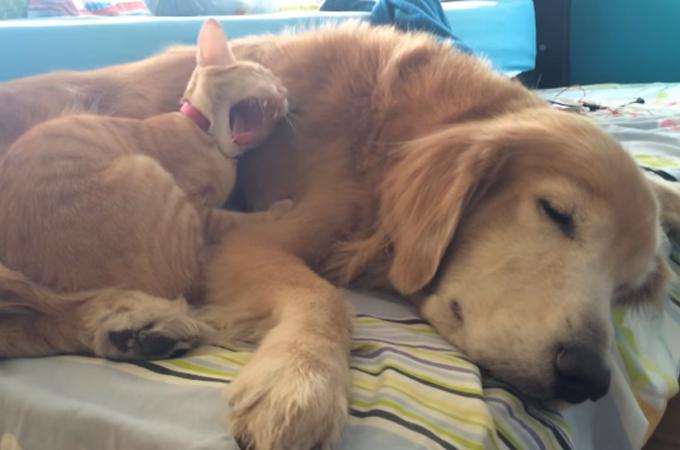 保護された子猫の心を癒す犬。家族となり共に成長する姿に心温まる