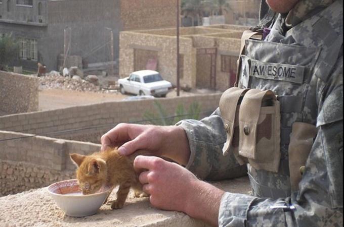 平和な世界へ!猫と触れ合う兵士たち。優しさの瞬間がそこにはある