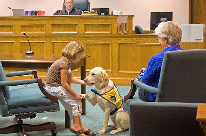 裁判所で被害者の心のサポートをするために働く犬たち