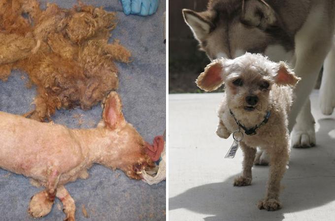毛がからまり足を失ったホームレス犬が私たちへくれる勇気に感動