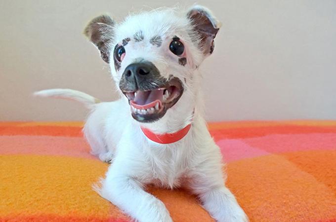 輝く個性を持っている!障害を持つ犬に新しい家族が見つかるまで