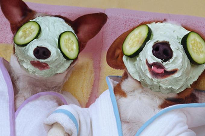 リラックスタイム!アロマ・エステ・お風呂好きのおしゃれな犬たち