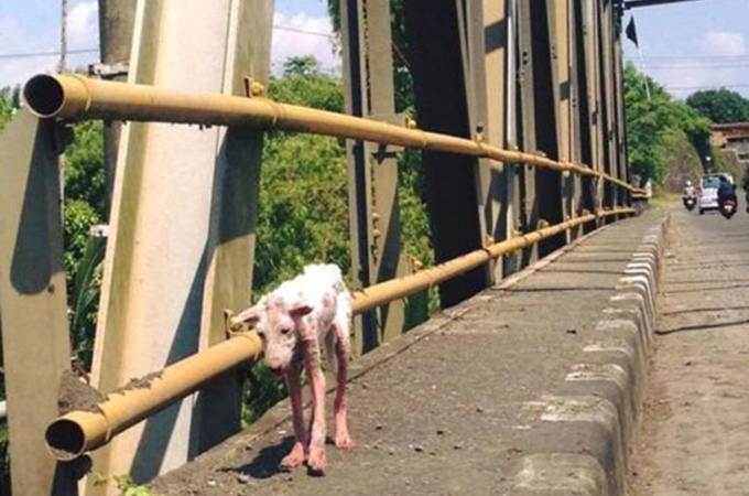 ホームレス犬がたくさんの愛を受け生まれ変わる!ビフォー・アフター