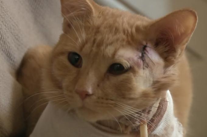 銃社会ならではの凶悪な事件!身を呈して子供を守った勇敢な猫