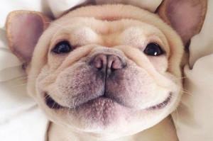 私たちを笑顔にしてくれる犬、猫、動物たちの癒し画像15選