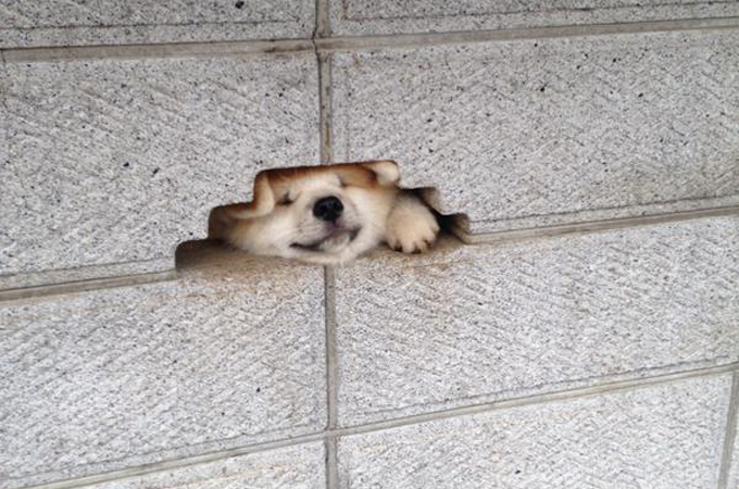 こんにちはを言いたくて仕方がない犬が必死で可愛すぎると話題に