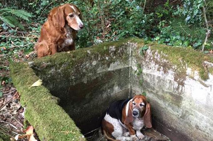 助けがくるまで友達のそばを片時も離れようとはしなかった優しい犬