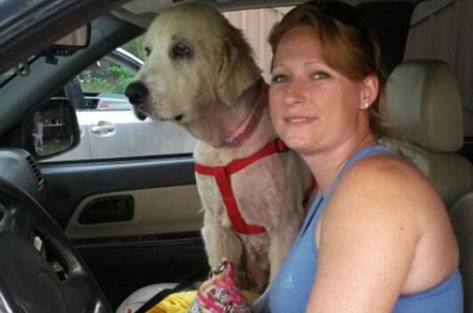 竜巻で亡くなった飼い主さんの腕の中から発見された犬の第2の人生