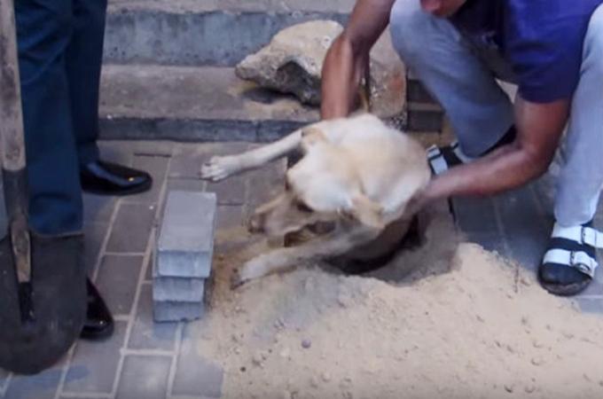 再び起きてしまった悲しい事件!2日間生き埋めにされた妊娠中の犬