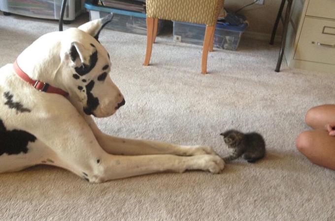 犬と猫は親友であることが証明されたほっこり画像14選