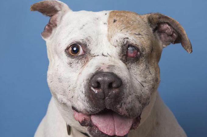 闘犬の噛ませ犬として利用され続けてきた1匹の犬に新しい人生を