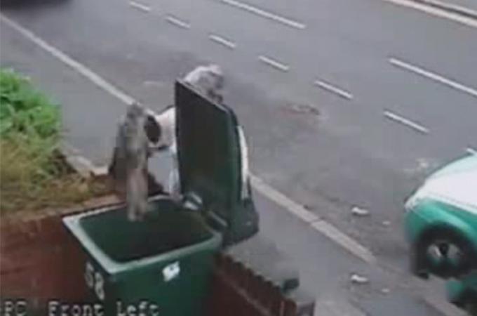 足を引きずる犬を放棄する人間とゴミ箱に猫を捨てる人間