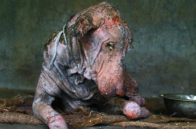 人の愛が瀕死のホームレス犬を救う!保護され輝きを取り戻すまで