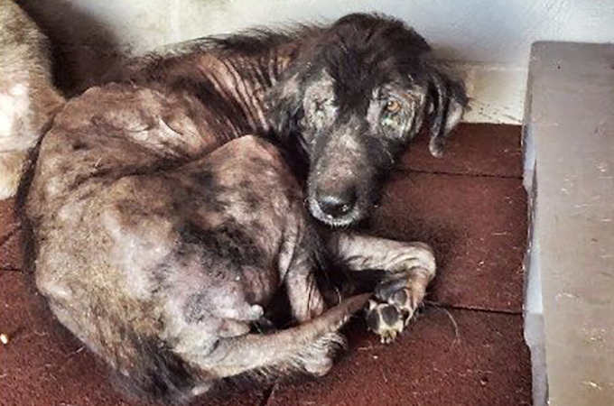 劣悪環境に放置され続けたある犬の二度目の新しい人生が始まる