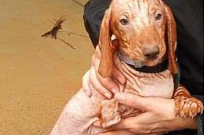 ダンボール箱に入れられ捨てられた3本足の子犬が発見される