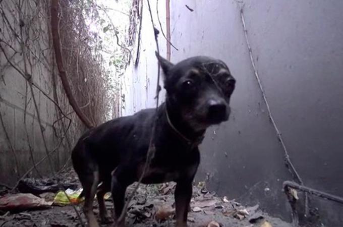 産業廃棄物まみれの劣悪環境に住むホームレス犬が救出されるまで