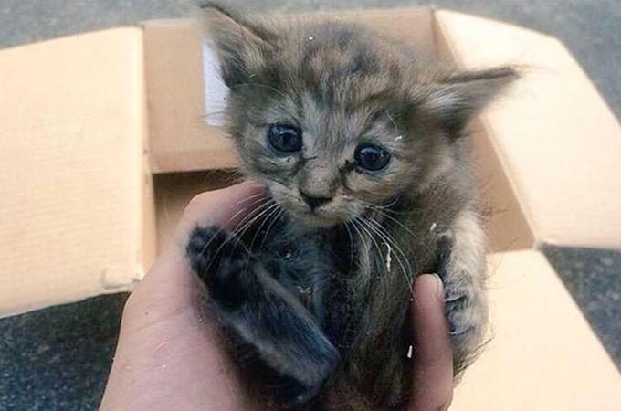 生後わずか5ヶ月で捨てられた子猫が保護されフェレットに生まれ変わる
