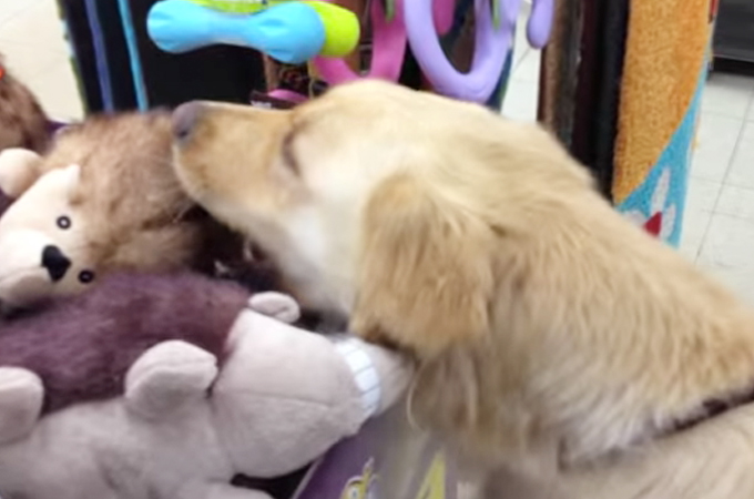 殺処分寸前で救い出された犬の初めてのおもちゃ選びに溢れる涙