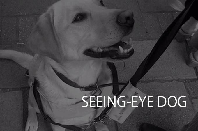 無抵抗な盲導犬をいじめる小学生に対し1人の男性がとった行動とは