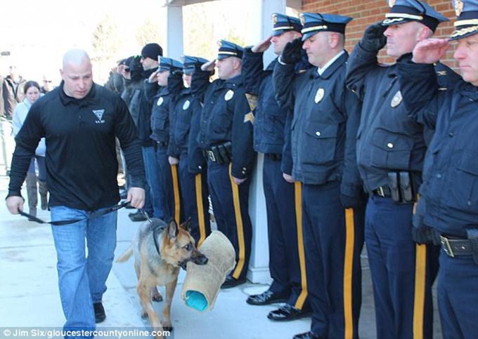 英雄元警察犬が多くの同僚に見守れる中、最後の敬礼を受け安楽死
