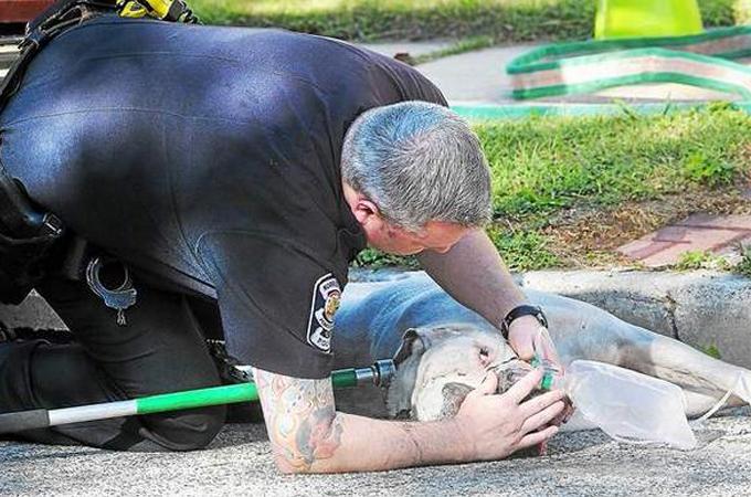 燃えさかる炎の中に取り残された犬を命がけで救出した勇敢な消防士