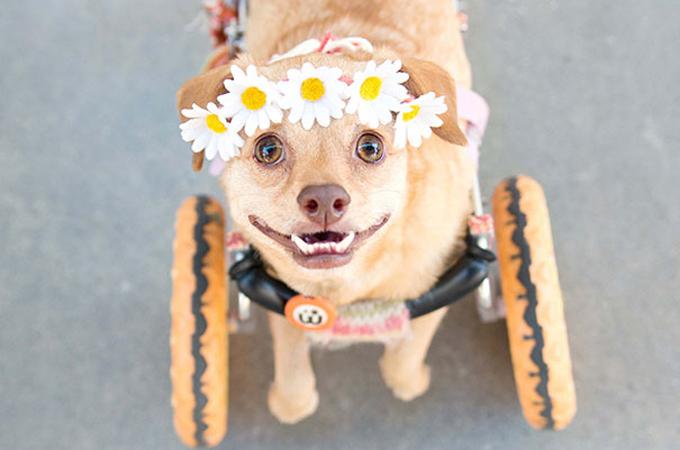 障害を持って生まれたことで安楽死を迫られた1匹の犬が元気に走り回る