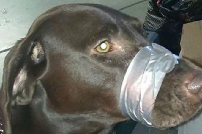 吠えるのをやめないからと愛犬の口をテープで縛る飼い主が見つかる