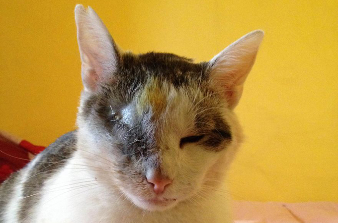 片目を失い汚れた身体でさまよっていた猫があたたかい家族に出会う