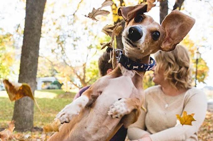 婚約記念の撮影をとにかくジャマする愛犬のテンションがすごすぎる