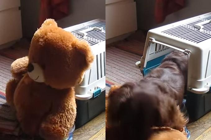 ある1匹の犬の揺るぎない決意が不可能を可能にした瞬間!