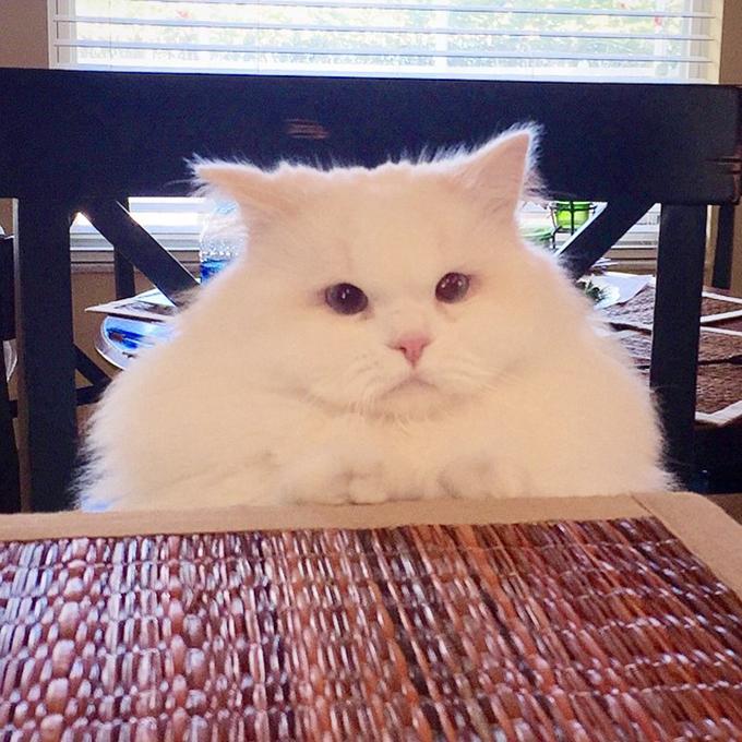 子猫の画像5